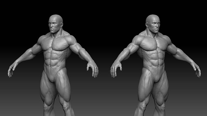 3d model muscular male body vr / ar / low-poly obj fbx ztl, Muscles