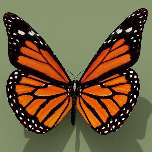 monarch butterfly 3d model obj mtl 3ds fbx ma mb stl blend 1
