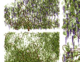 Wisteria plant 3D