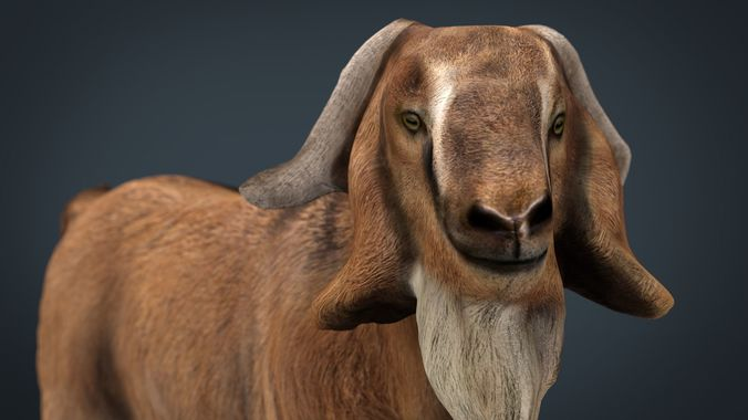 domestic goat 3d model max obj mtl fbx ma mb 1