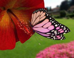 Butterfly With Flower 3d Model render