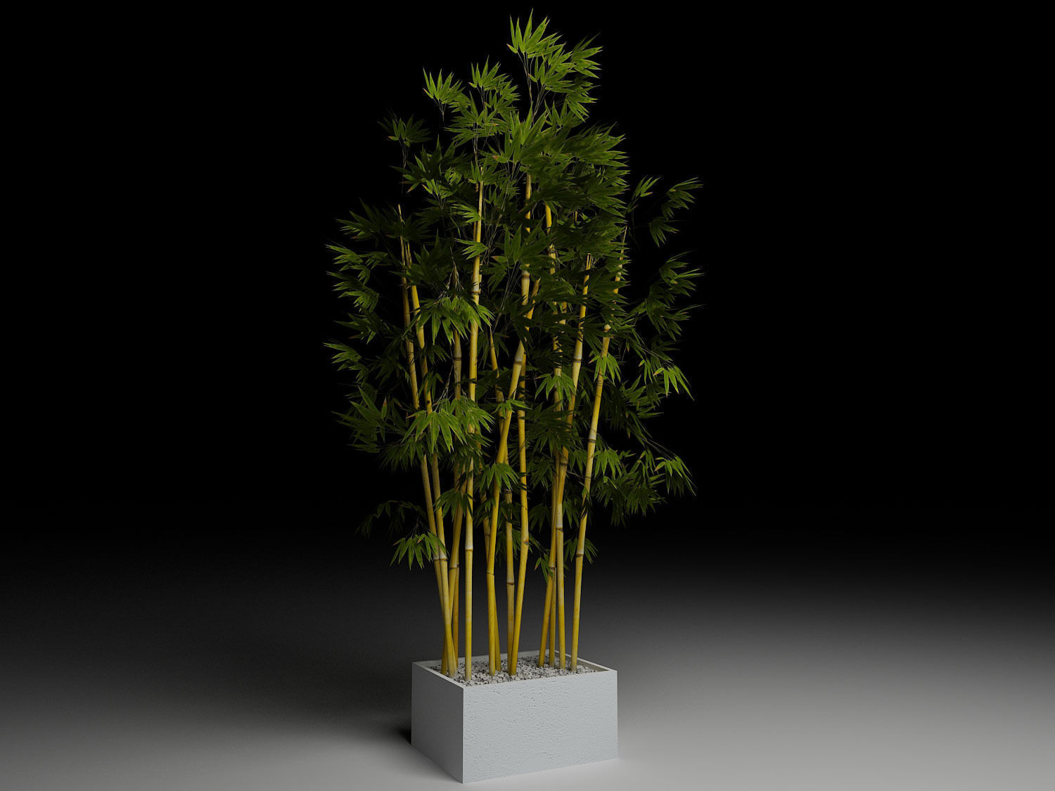 Bamboo in planter box 3d model 3ds max files free download ...