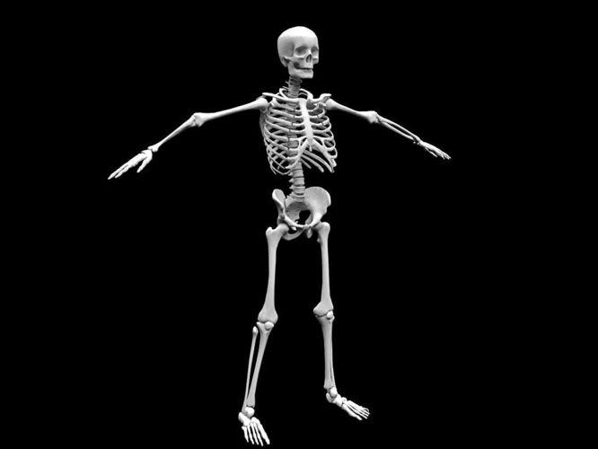 3D model Realistic Human Skeletal System | CGTrader