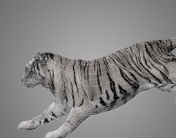Tiger Animated 3D model animated