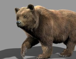 bear braun 3d model rigged animated max
