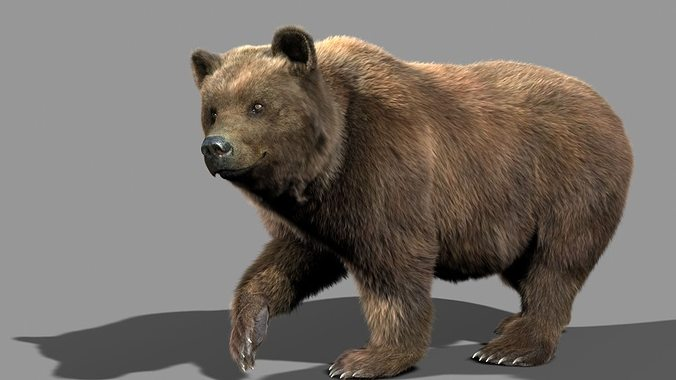 bear braun 3d model rigged animated max 1