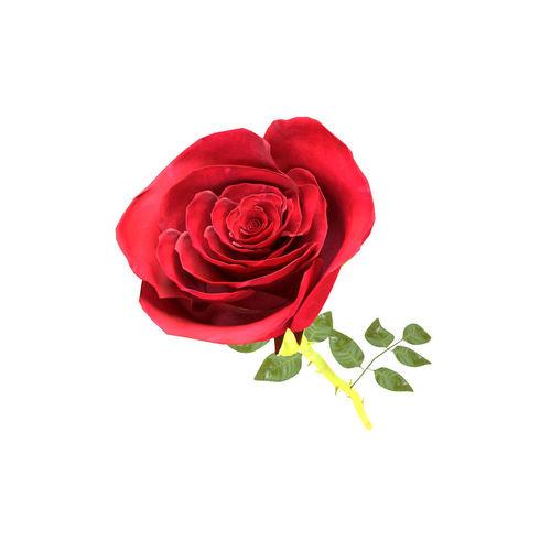 rose beautiful 3d model max obj mtl fbx mat 1