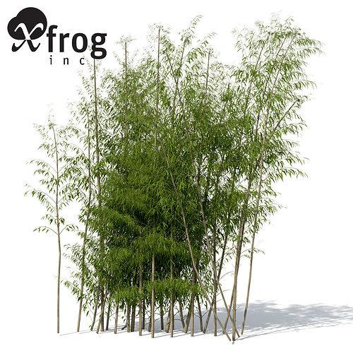 xrogplants golden bamboo 3d model max obj 3ds c4d lwo lw lws ma mb 1