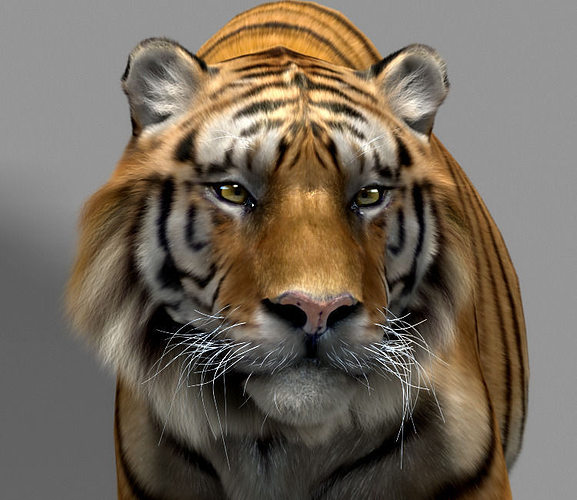 tiger 3d model rigged animated max 1