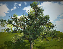 3D asset Tree oak with LOD