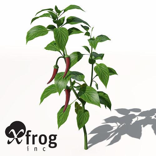 XfrogPlants Chili Pepper