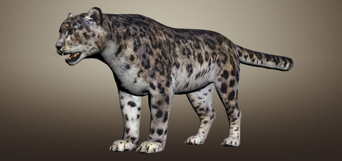 snow leopard animated 3d model 3d model low-poly rigged max 1