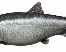 animated lake trout 3d model realtime