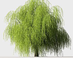 3D Tree Willow