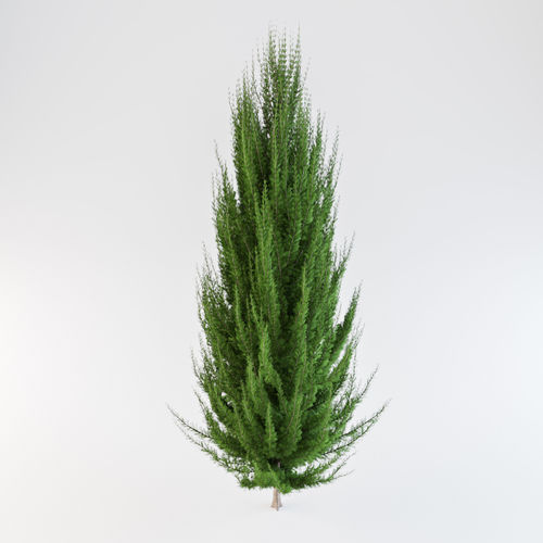 juniper tree 3d model max obj mtl 1