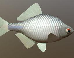 Russian fish gorchak 3D asset