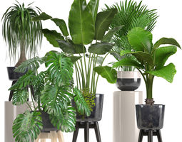 tree 3D Collection of ornamental plants in pots