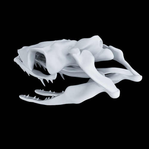 skull snake - opsthoglyphous 3d model obj mtl 1