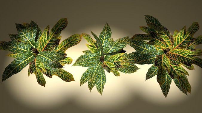 tropical croton bush