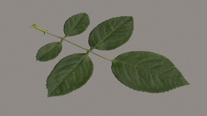 rose leaf  3d model max obj mtl fbx 1