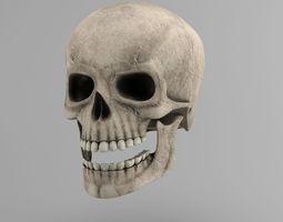 Skull 3D model low-poly dental