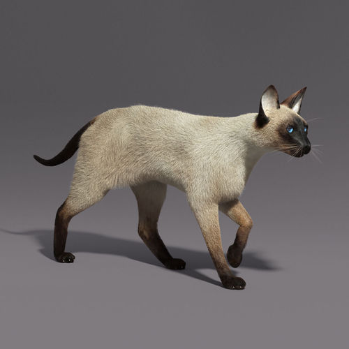 siamese cat 3d model - photo #10