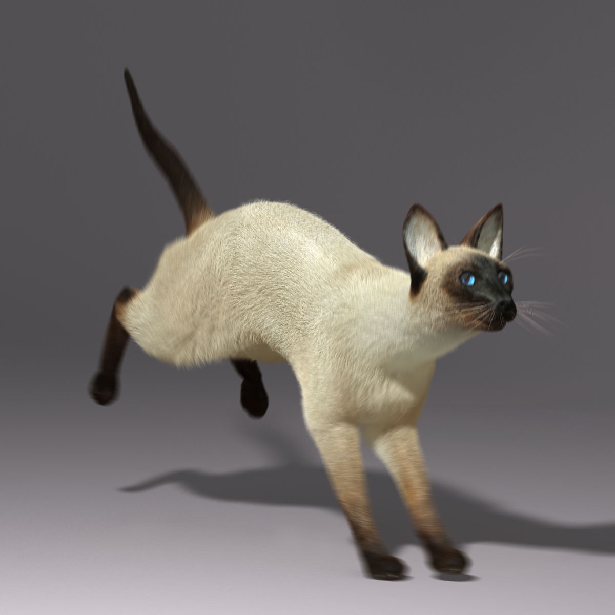 siamese cat 3d model - photo #18