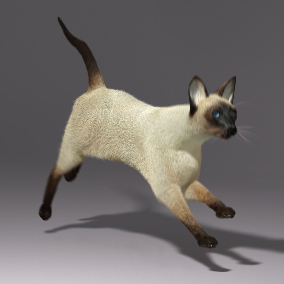 siamese cat 3d model - photo #46