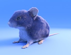 3D model Mouse - grey brown white fur - rigged - Xgen - 1