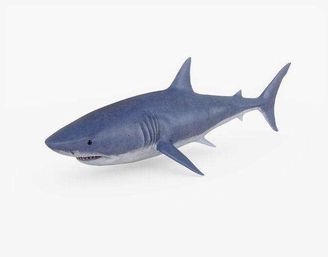 great white shark 01 3d model obj mtl 3ds fbx stl 1