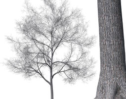 3D model Tree without leaves