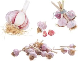 Garlic 3D