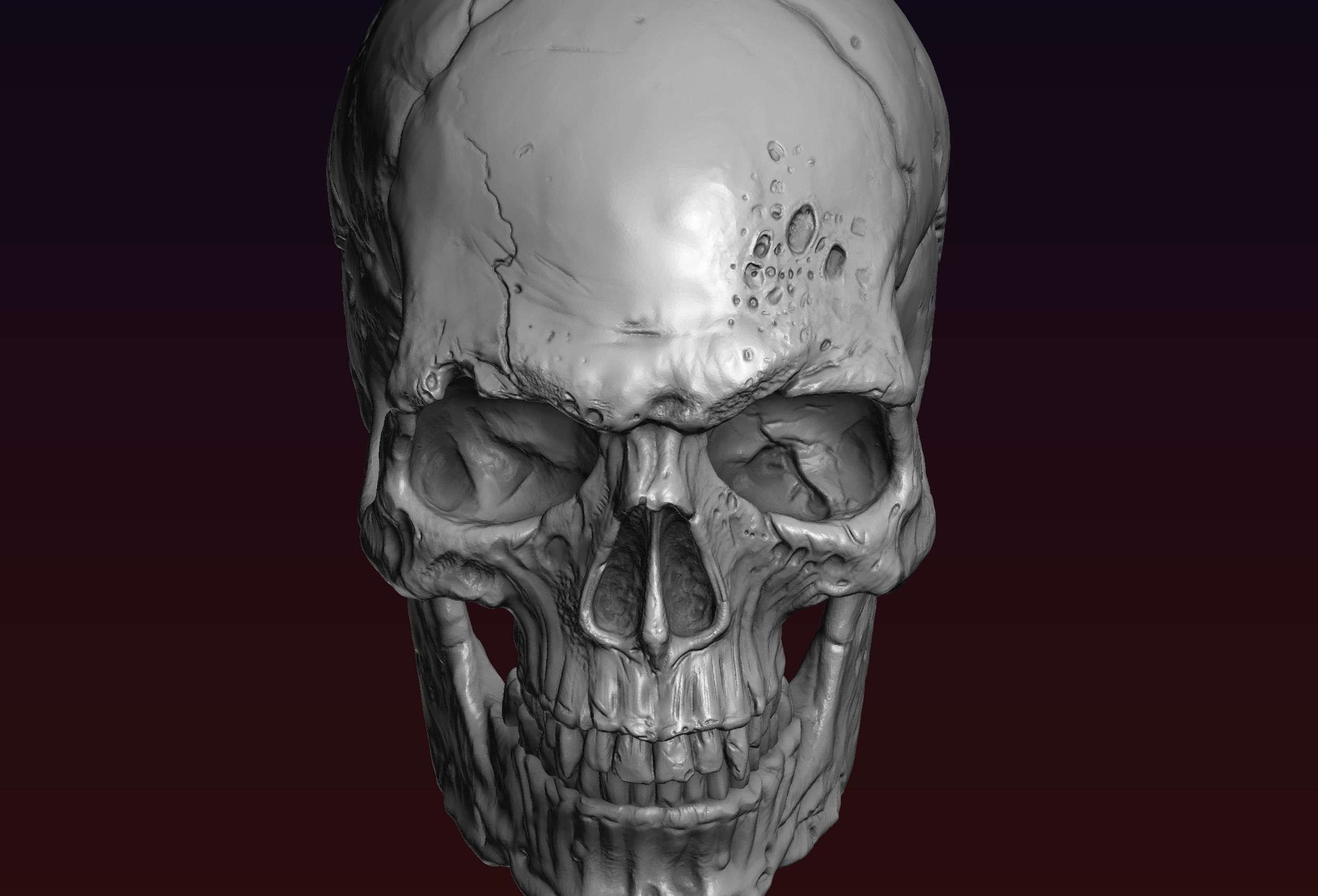 Skull detailed