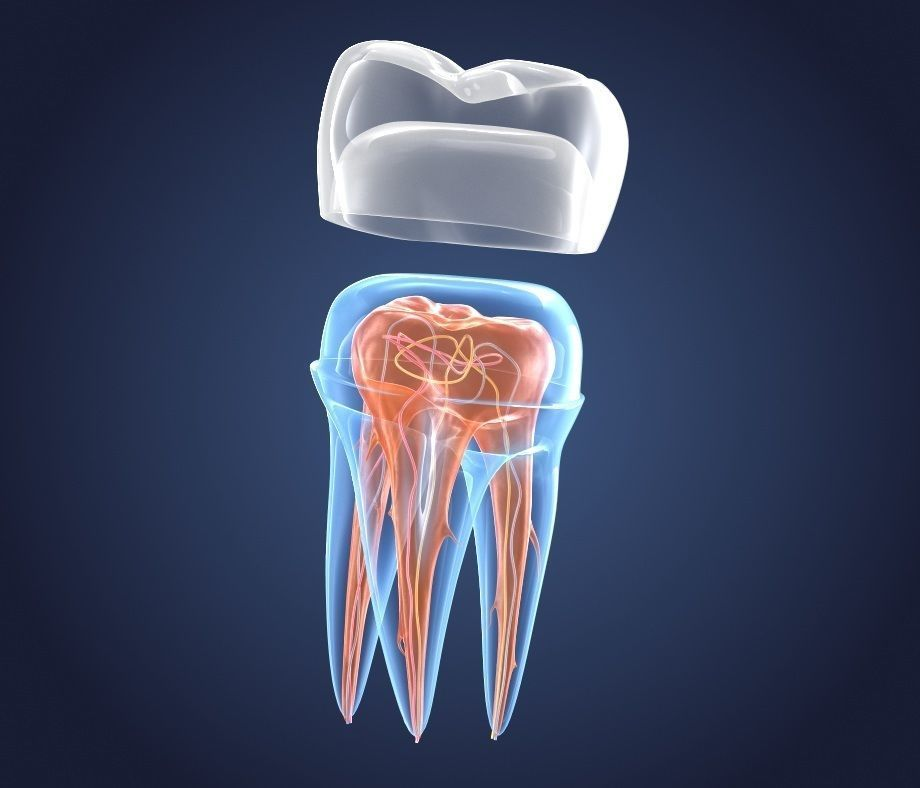Transparent tooth and crown endodontics inner structure