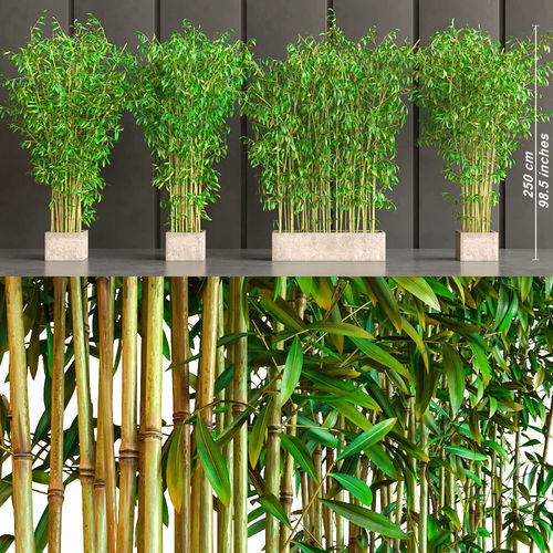 bamboo plants in pots 3d cgtrader