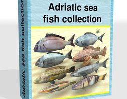 3D model Adriatic sea fish collection