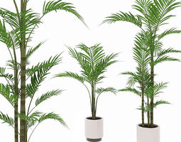 stem 3D model Palm tree