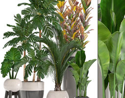 variegatum Collection of ornamental plants in pots 3D