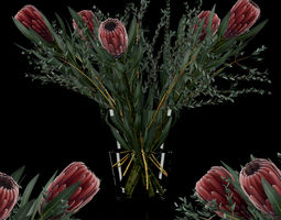 Protea with Eucalyptus parvifolia 3D model