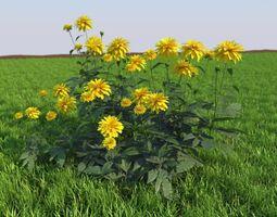 3D model flowerbed rudbeckia