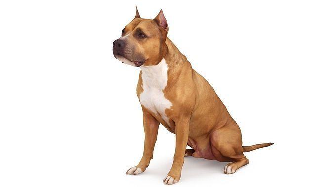 staffordshire terrier dog 3d model max obj mtl 3ds fbx stl skp 1
