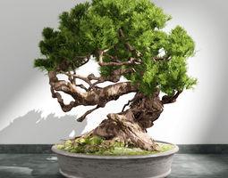3d bonsai plant