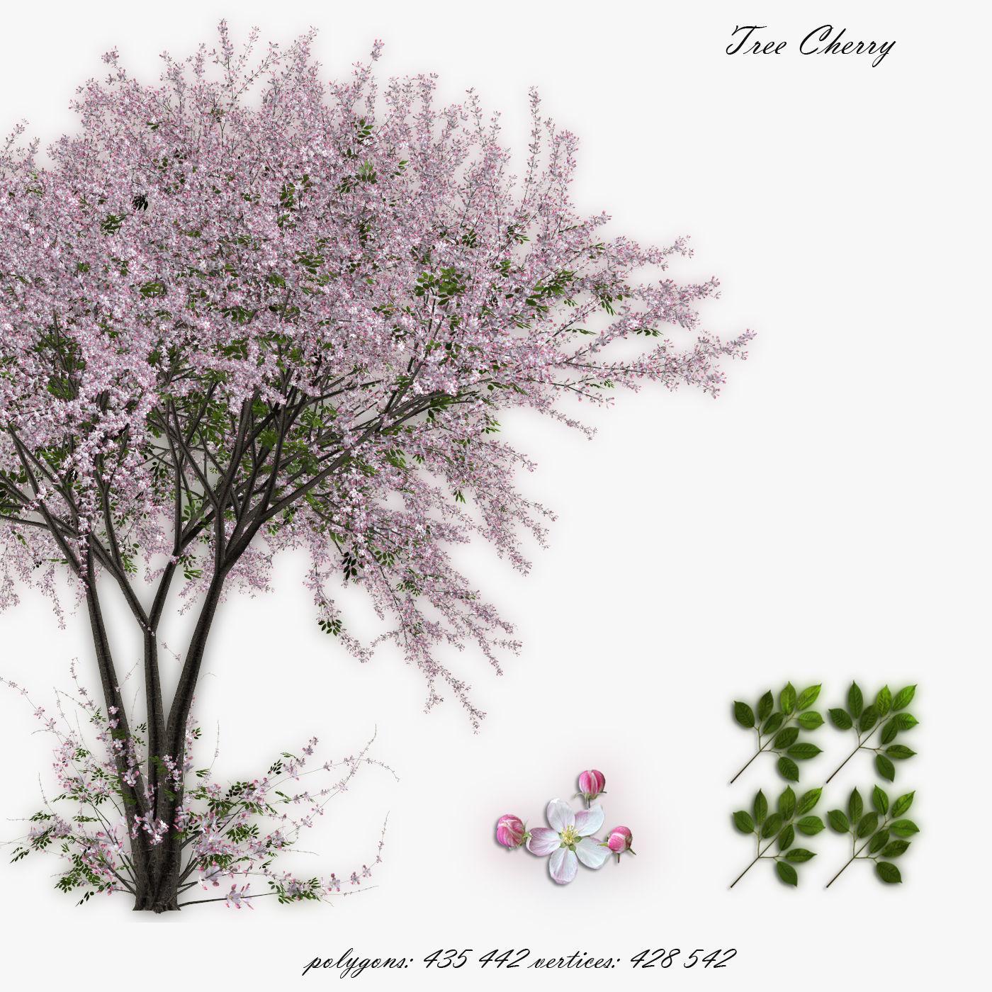 Tree Cherry 02
