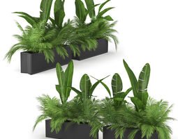 Flowerbed Palm Two 3D