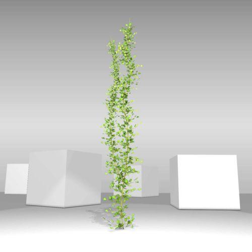 Ivy Vine - Version 2