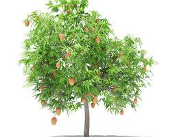 3D model Mango Tree with Fruits