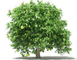 Pomelo Tree with Fruits 3D