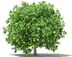3D Pomelo Tree with Fruits