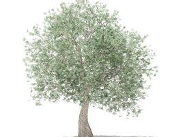 tree 3D model Olive Tree