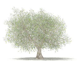 3D Olive Tree with Fruits tree